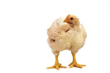 Kompletní krmivo pro výkrm kuřat BR 3 - 5kg