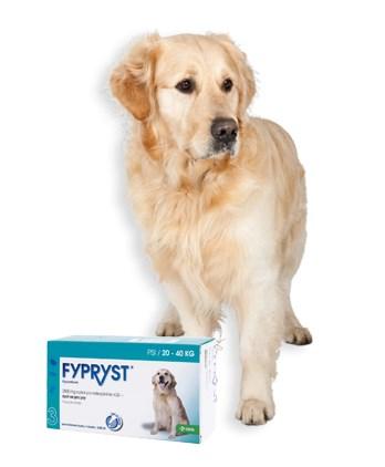 Fypryst spot on L 1x2,68ml 268mg pes 20-40kg