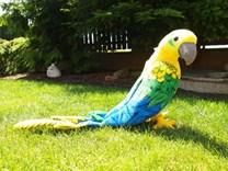 Plyšový papoušek ARA 58cm CPA40G