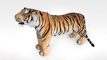 Nádherný stojící tygr