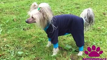 Modrá kombinéza overal pro psy