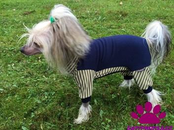 Zeleno modrý obleček pro psa