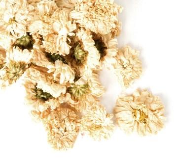 Květ chryzantény