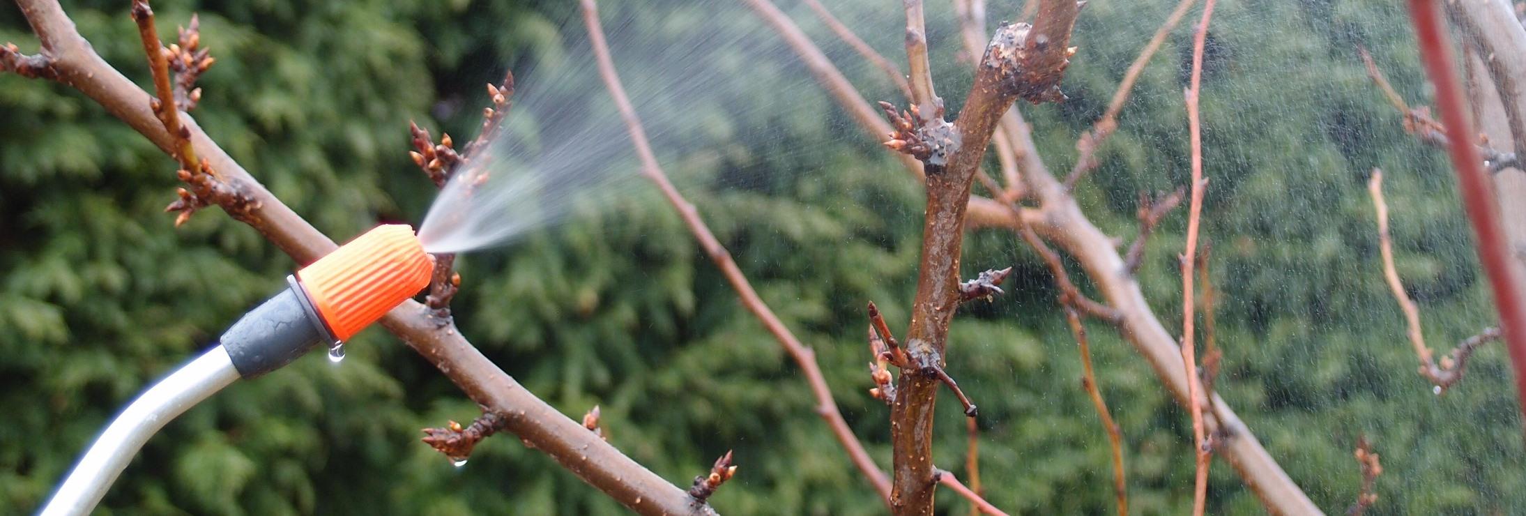 Postřik ovocných stromů a keřů