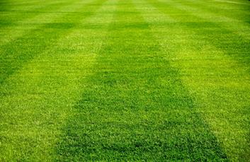 Sportovní trávník