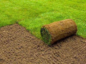 Předpěstované travní koberce