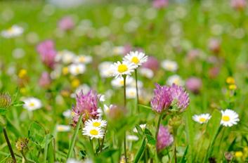 Kvetoucí louka, krajina a pastvina