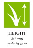 height-seda.jpg