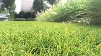 Umělý trávník Royal Grass WAVE