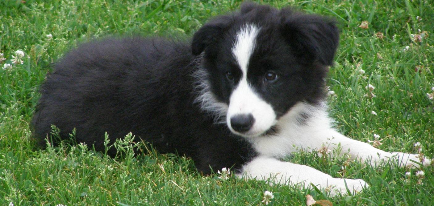 1. Díl – Máme doma štěně!