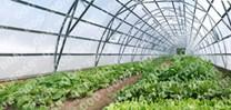Farmářský profesionální skleník FARMER 6,3 x 7,5 - Volya LLC