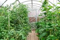 Polykarbonátový skleník Econom 6m ( 6 x 3 m ) - Volya LLC