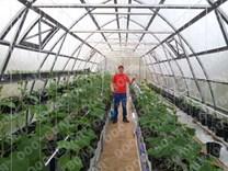 Farmářský profesionální skleník FARMER 6,3 x 4,2 - Volya LLC