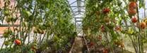 Polykarbonátový skleník Strelka3 6m ( 3 x 6 m ) - Volya LLC