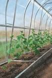 Polykarbonátový skleník Dvushka 8m ( 8 x 2 m ) - Volya LLC