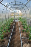 Polykarbonátový skleník Dvushka 6m ( 6 x 2 m ) - Volya LLC