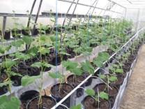 Farmářský profesionální skleník FARMER 16,8 x 4,2 - Volya LLC