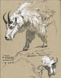 Faber-Castell, 167499, Pitt artist pen, popisovač se štětečkovým hrotem (brush), 1 ks - Black 199