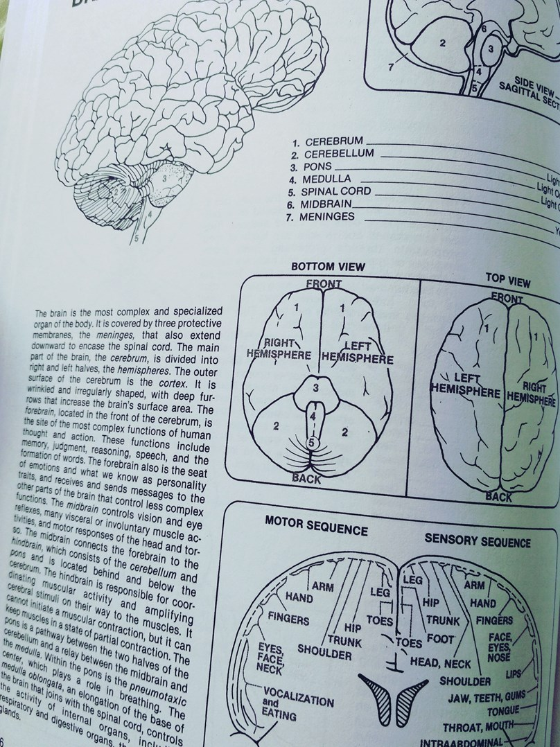 Human Anatomy Colouring Book Margaret Matt Krajinaomalovanek Cz